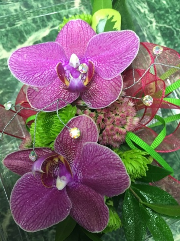 Opulent Phalaenopsis Orchids