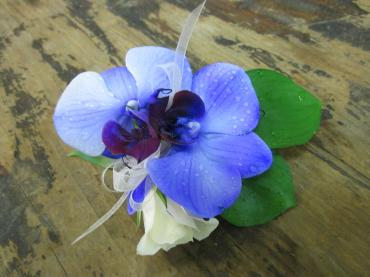 Dreamy Purple Orchid