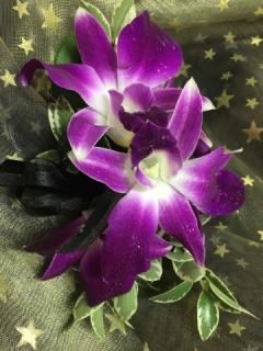Exquisite Orchid